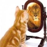 kitten lion mirror