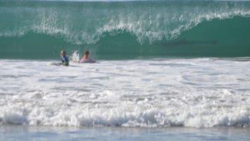 shark in wave